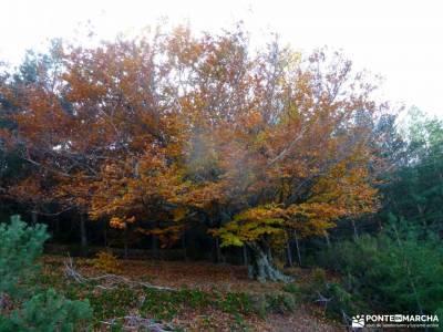 Hayedo Tejera Negra; parque natural de hornachuelos; fiestas temáticas nacimiento de urederra trekk